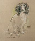 Spaniel Jed by Barrie Linklater