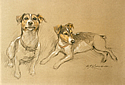 Jack Russell sketch by Barrie Linklater