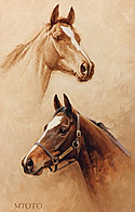 Head Studies of Stallion Mtoto by Barrie Linklater